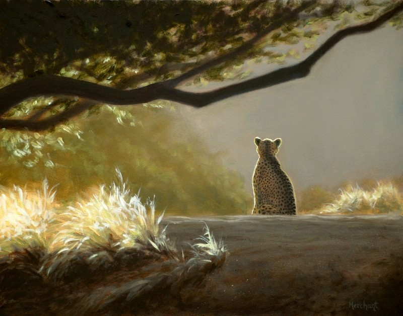 Keeping Watch- Cheetah, Oil on Panel, 11x14, 2011.