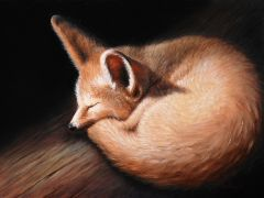 Kit Fox, Oil on Panel, 9x12, 2009.